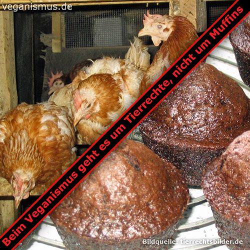 Beim Veganismus geht es um Tierrechte, nicht um Muffins